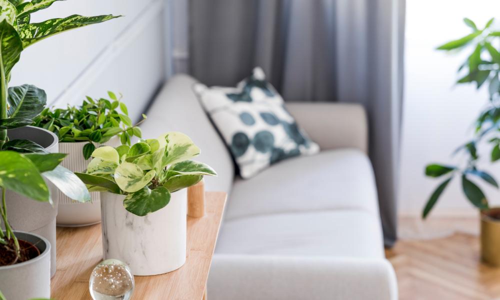 Plantas em Casa: Como Cuidar e Quais as Espécies mais Indicadas